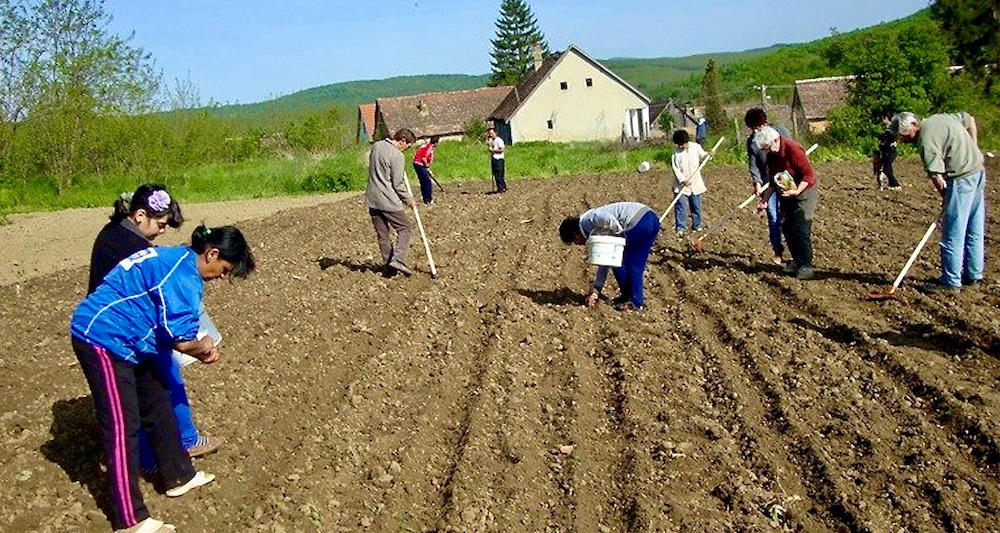 Sowing and harvesting in Hungarian Roma communities