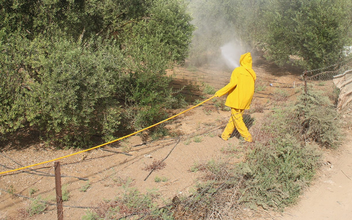 Enhancing food security of olive farmers in Palestine